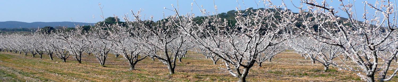 cerisiers-fleurs_1500x313_P1020906